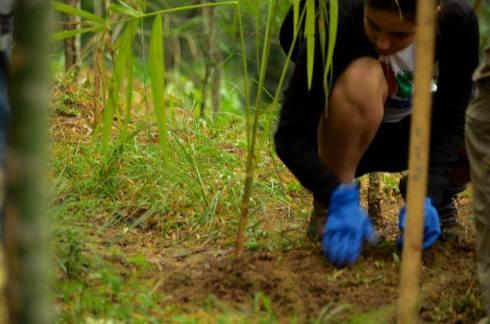 Mutirão na Trilha Janela do Céu no PNM Penhasco Dois Irmãos - Caminhadas Ecológicas RJ